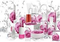 Soft Rose  - Нежная Роза